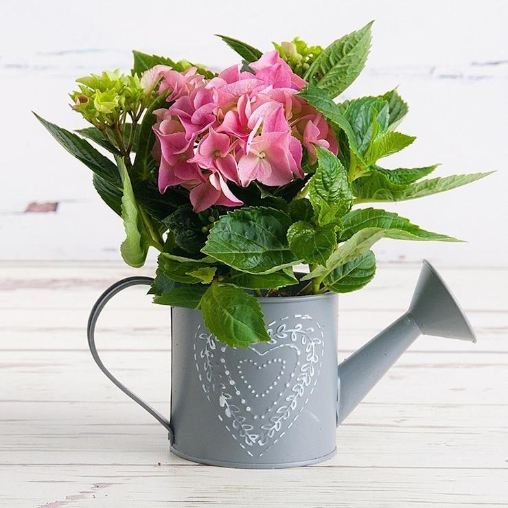 Petite plante hortensia : moderne par Appleyard London, Moderne