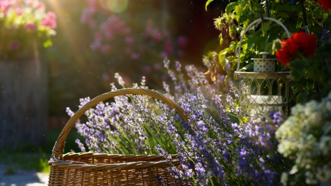 Décorer son jardin avec goût