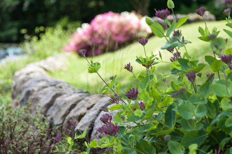 Chèvrefeuille Jardin de style rustique par Barnes Walker Ltd Rustic