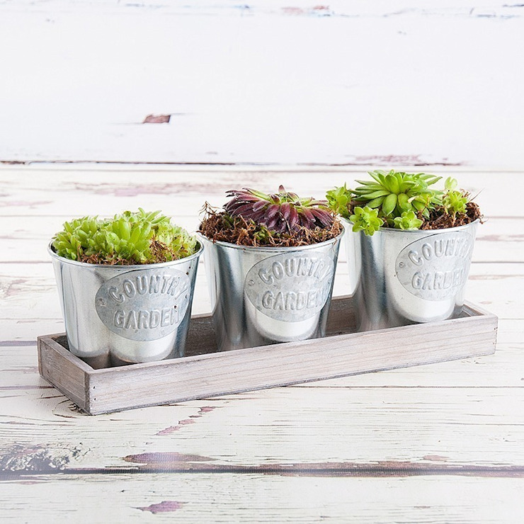 Summer Trio Planter : modern by Appleyard London, Modern